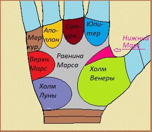 Распределение холмов на руке