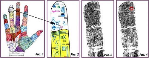 Как трактуется символ на фалангах пальцев
